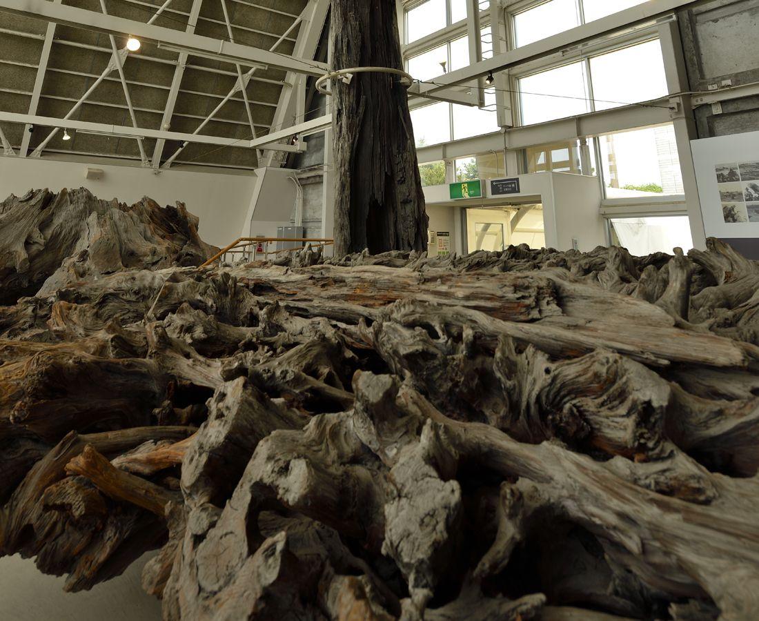 魚津埋没林〜特別天然記念物の古代の森林跡