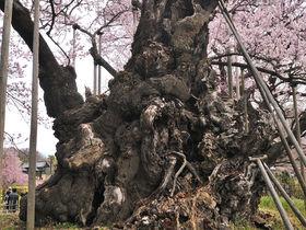 山梨・山高神代桜と併せて巡る雄大な山岳風景と芸術作品