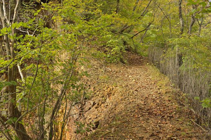 鼻曲山の登山〜鼻曲峠まで続く長い尾根歩き