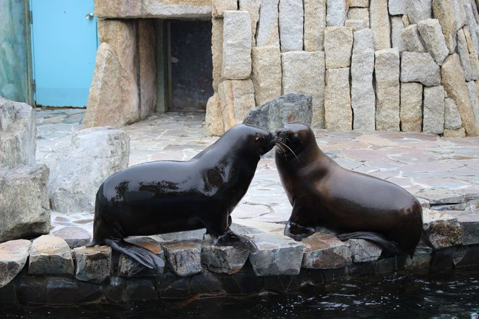 行船公園には動物園も