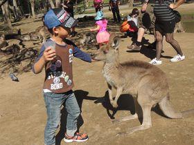 コアラ抱っこやカンガルーの餌付けも!ゴールドコーストの動物園