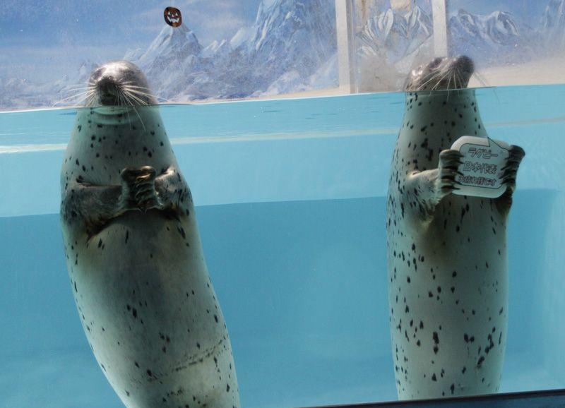 あの五郎丸ポーズのアザラシに会える「下田海中水族館」