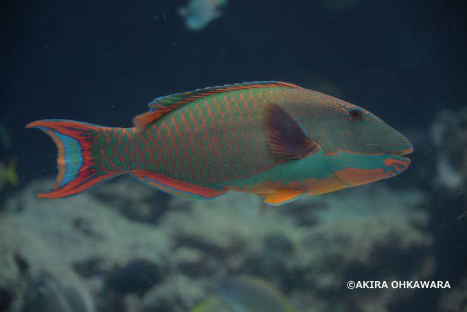 大人気の沖縄美ら海水族館