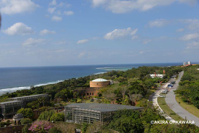 2000株のランが綺麗に咲き誇る熱帯ドリームセンター