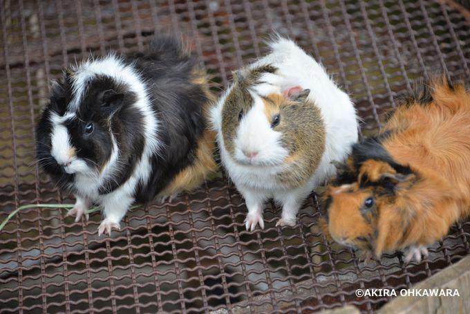 小動物達と触れ合える「わくわくふれあい広場」