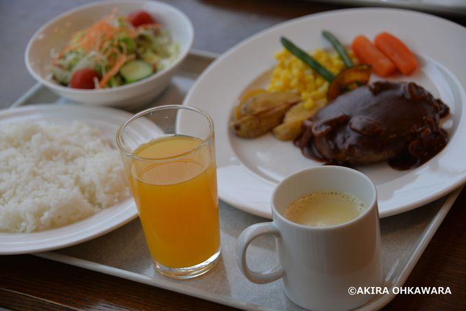 猛獣を見ながら食事出来るレストラン「アニマルキングダム」