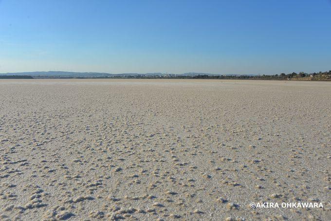 夏は干上がり、冬はフラミンゴが集まる塩湖