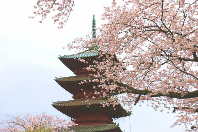 桜に彩られた五重の塔