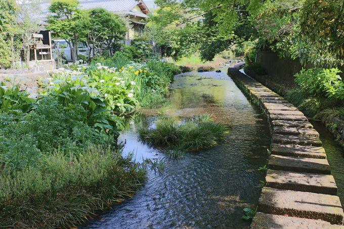 源流「楽寿園」から源兵衛川を南下する
