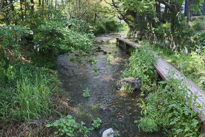 中流域の「水の苑緑地」へ