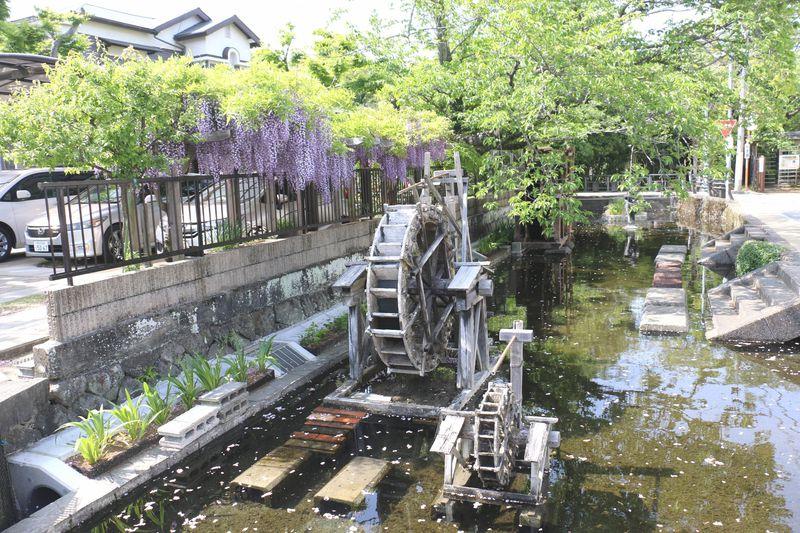 せせらぎが巡る水の廻廊都市「静岡三島」水辺のスポット5選