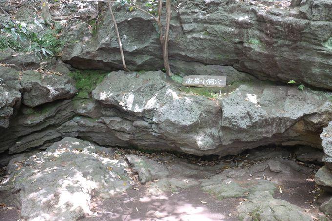 小浜池と溶岩と自然林と