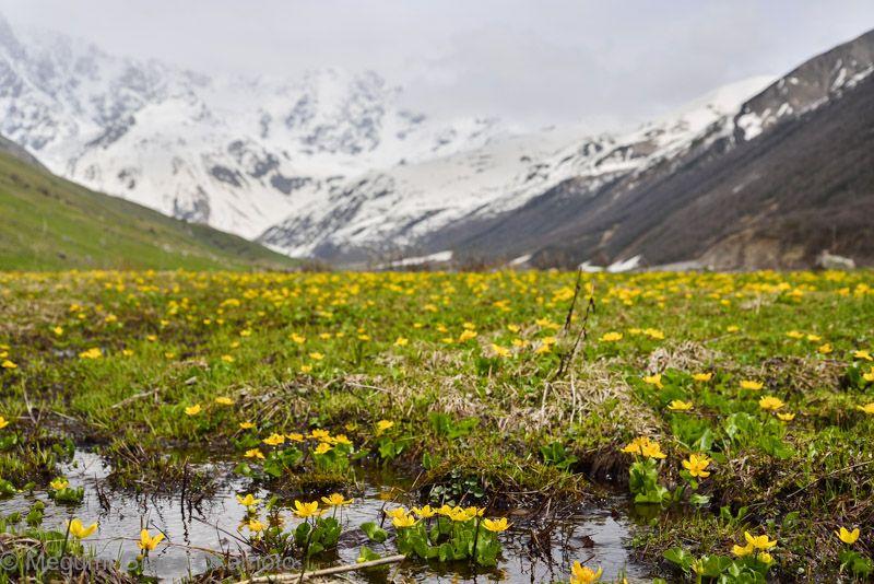 シュハラ山麓氷河の上を歩く、トレッキングに出かけよう