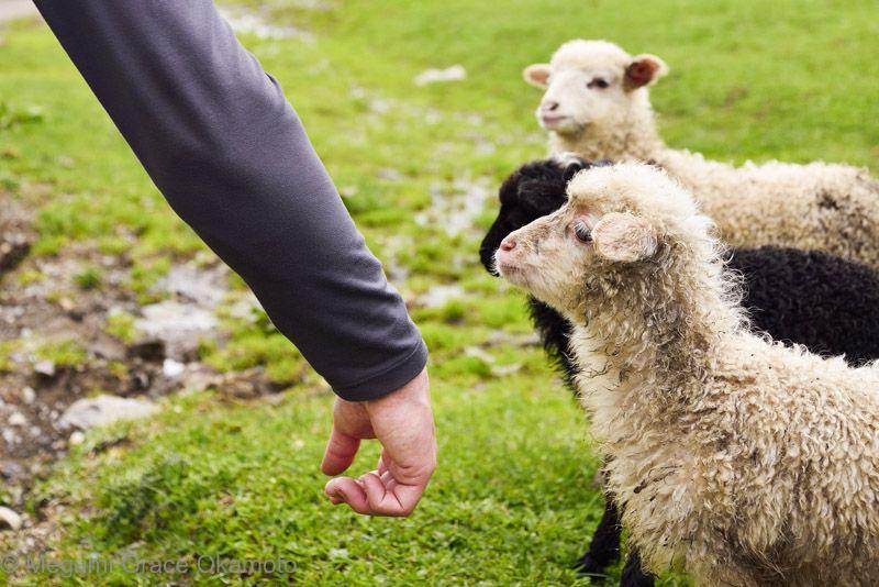 フレンドリーな家畜やペットと、遊んでみよう