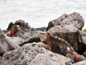 保存版!ガラパゴス諸島のおすすめ観光スポット6選