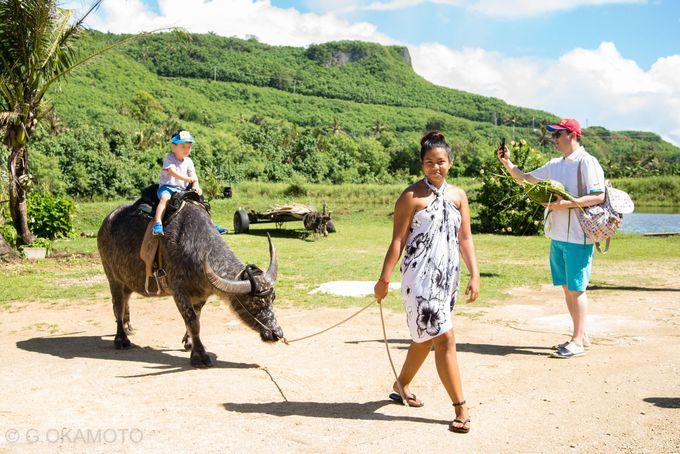 2日目:グアム産のマグロ「ポキ」と、水牛ライドができる「リバークルーズ」