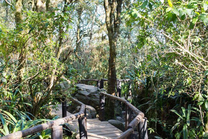 絶景とランの森を歩こう!「ゴッズ・ウィンドウ」へ