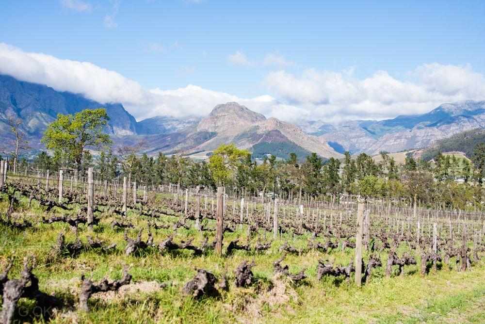 上質なワイン&美食の大人旅!南アフリカ・フランシュフックへ