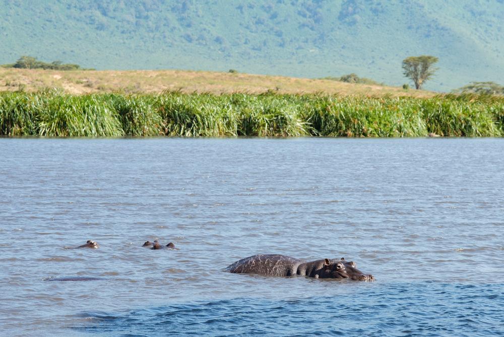 天然の動物園!?ンゴロゴロ自然保護区