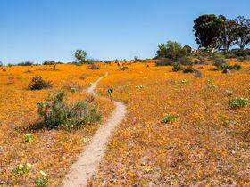 激レアの絶景!南アフリカ・ナマクアランドの「神々の花園」へ