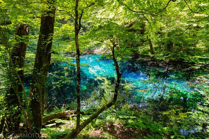 圧倒的な縄文の森!白神山地の多彩な魅力