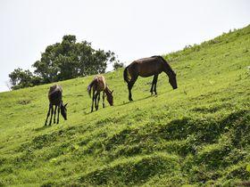 太平洋の絶景と野生馬「御崎馬」が棲息する宮崎「都井岬」