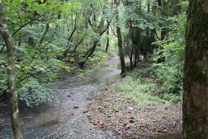 透き通った水が流れる川沿いは癒しのパワースポット!