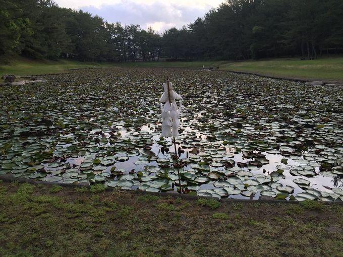 神々が生まれた禊池