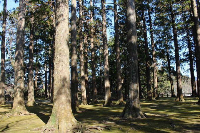 飫肥杉に癒される「旧本丸跡」