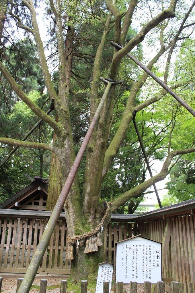 天鈿女命が枝を手に踊った御神木「招霊の木」