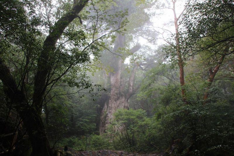 縄文時代へ5時間の旅!屋久島「縄文杉」に会いに行こう