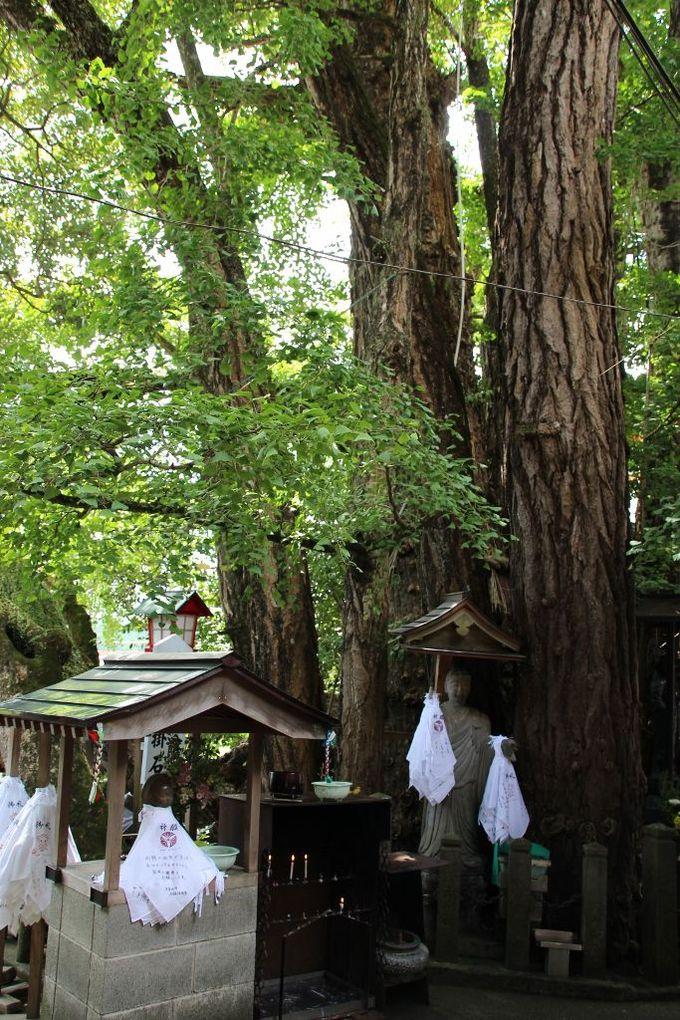 樹齢1300年の御神木から地蔵信仰が始まりました