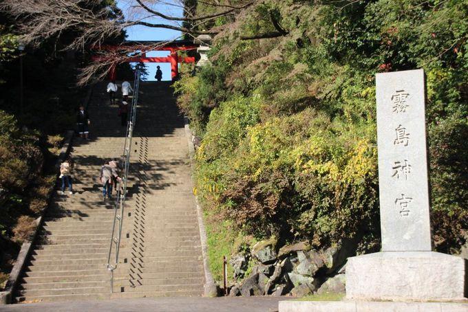 老杉がかもし出す清涼な空気が心地良い霧島神宮表参道