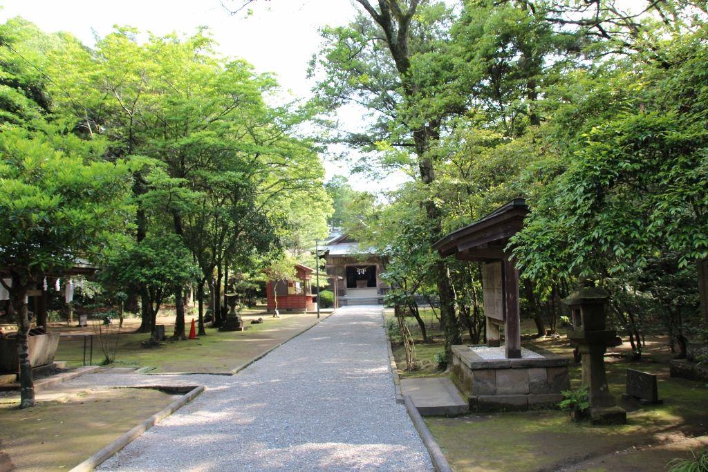 照葉樹が輝き神々しさが漂う江田神社参道