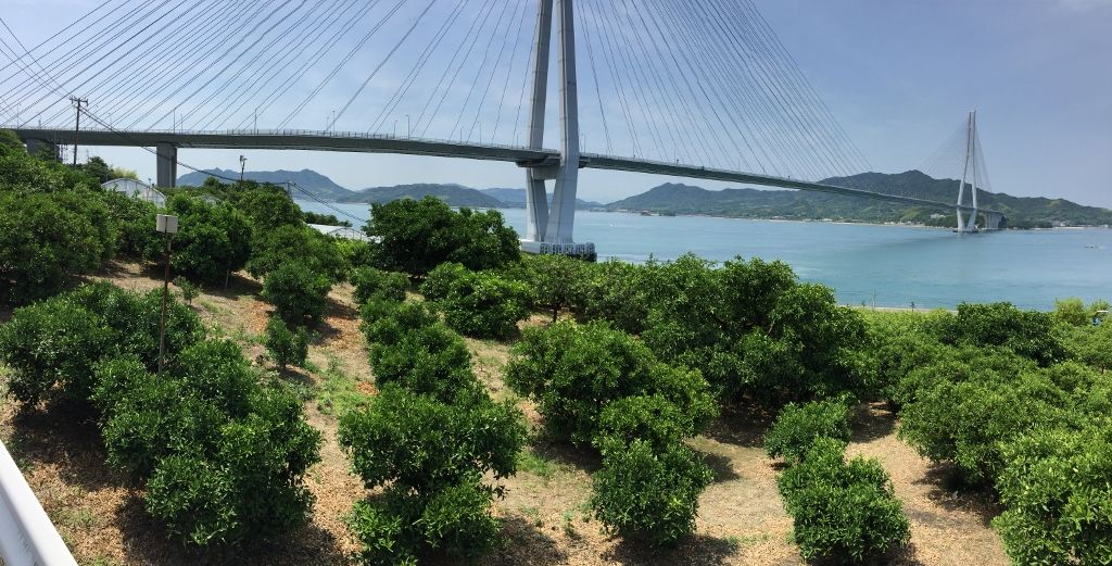 国産レモン生産が日本一の「生口島」