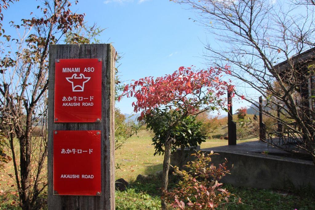雄大な阿蘇山を望みながらドライブできる「あか牛ロード」