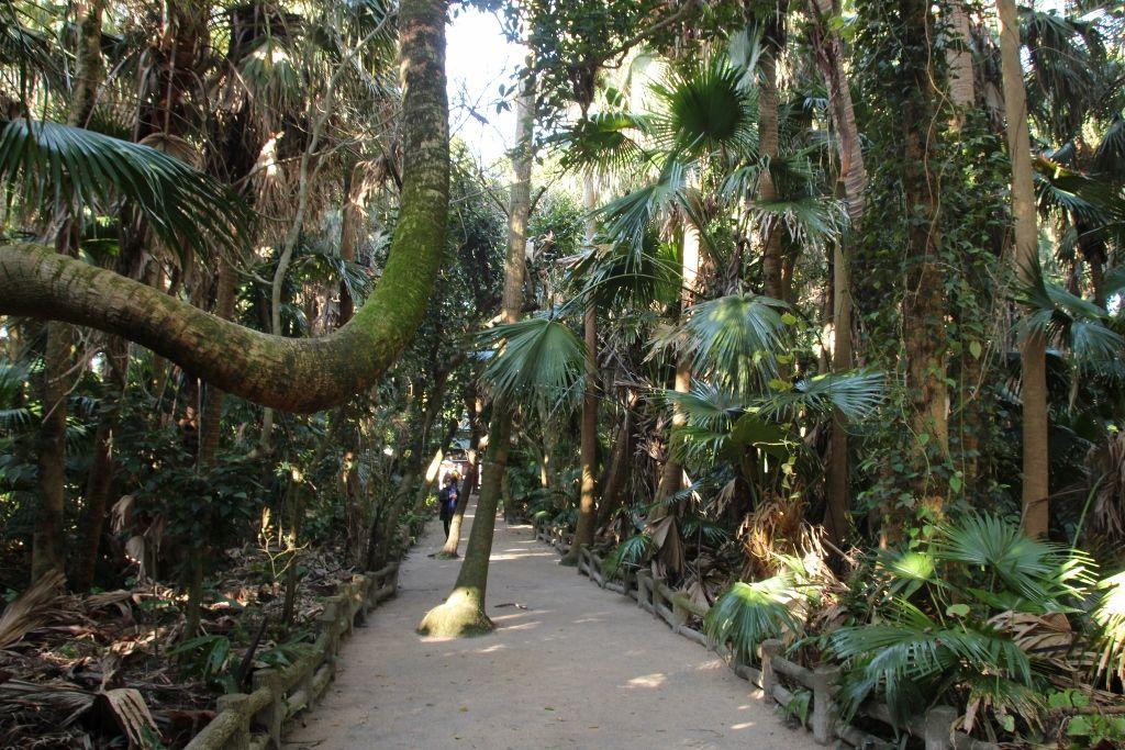 最強の縁結びパワースポットは神秘の森にある「元宮」