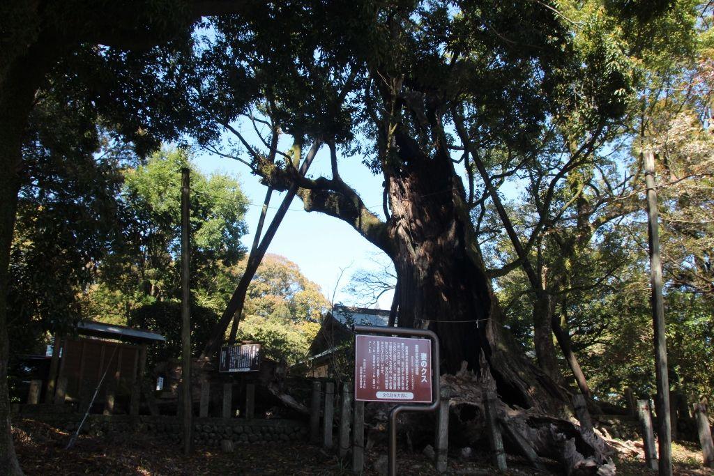 なんと樹齢1200年!生命力に満ちたご神木のクスノキ
