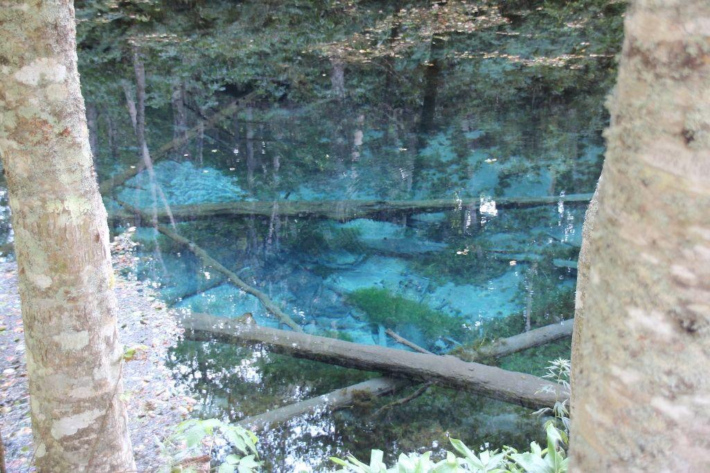 摩周湖が生んだ幻想的な神秘の池「神の子池」