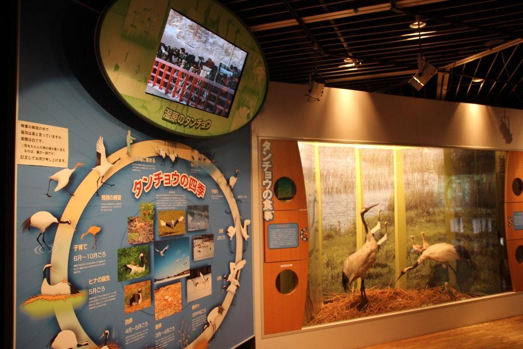 湿原情報が集まる定番スポット「釧路市湿原展望台」