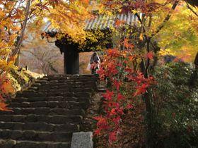 筑前の小京都 福岡朝倉市「秋月」の紅葉を楽しみ名物「葛」を味わう