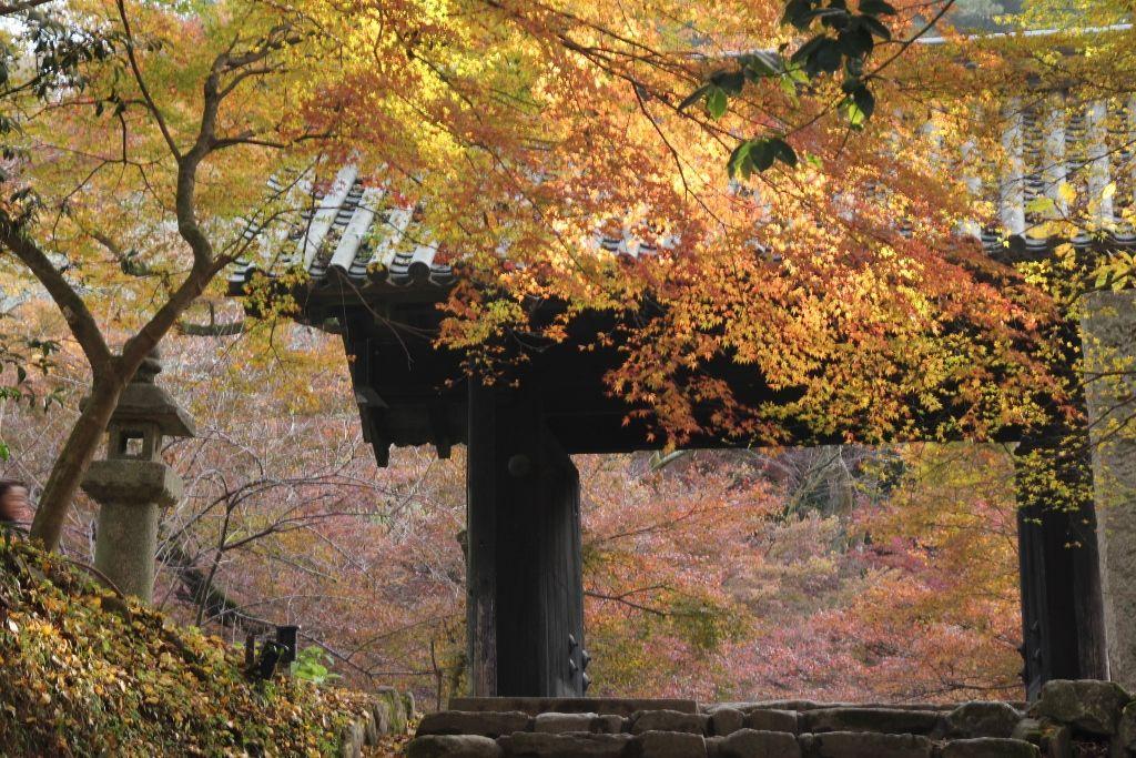 鮮やかな紅葉を浮かび上がらせる「黒門」