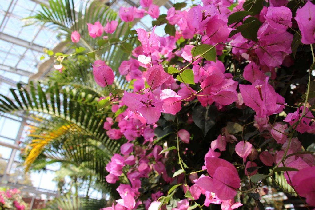 まるでシンガポールの植物園「大温室」