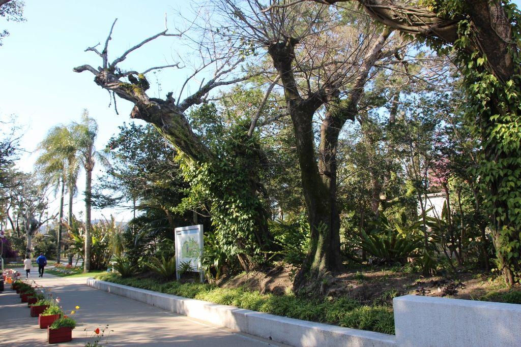 県立青島亜熱帯植物園の歴史を継承する正門から南国の世界へ