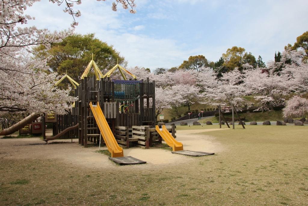 感動的な菊池公園の3000本の桜