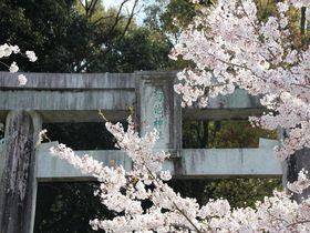 200メートルの桜トンネル参道に感動!熊本「菊池神社」