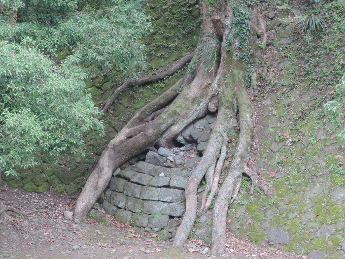 熊本城にタ・プローム遺跡を発見?