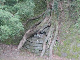 タ・プローム遺跡に清正の井戸!?熊本城の意外な楽しみ方