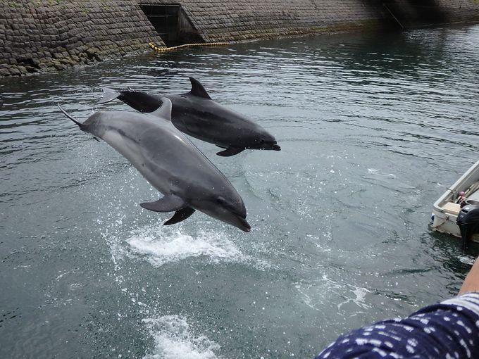 子連れ観光におすすめ「かごしま水族館・平川動物公園」