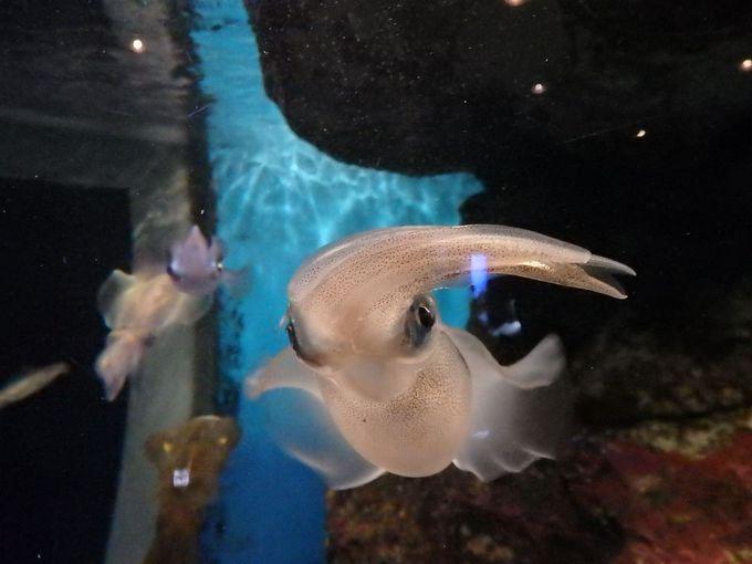 鹿児島の海の仲間たち
